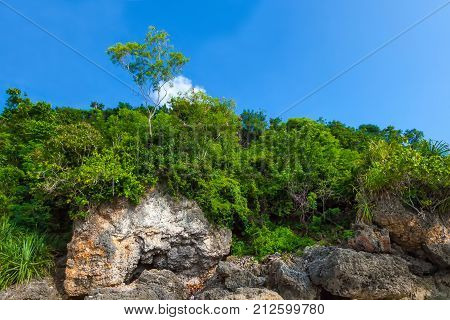 A green solitary tree in a wooded area rises on a rock against a blue sky. Copy space for text. Padang Padang Beach, Bali, Indonesia.