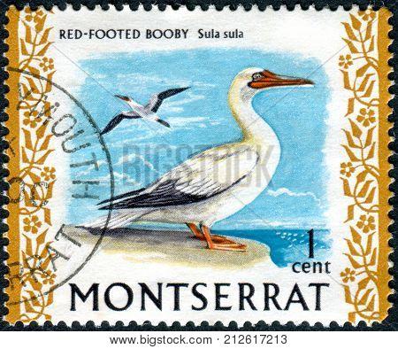 MONTSERRAT - CIRCA 1970: Postage stamp Montserrat (British Overseas Territory) shows the Red-footed Booby (Sula sula) circa 1970