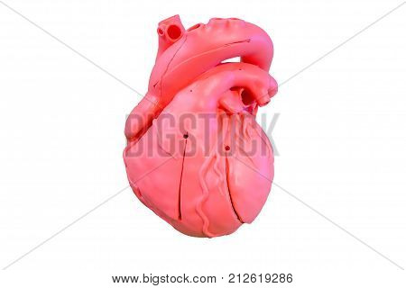 Anatomy model silicone type of the cardiovascular system for use in medical education, isolated on white background