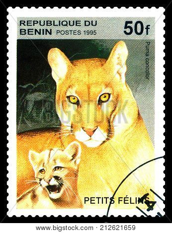 STAVROPOL RUSSIA - August 07 2017 : A Postage Stamp Printed in the Benin shows Cougar (Puma concolor) circa 1995