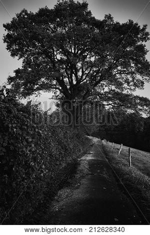 Twilight, tree and way in the dark