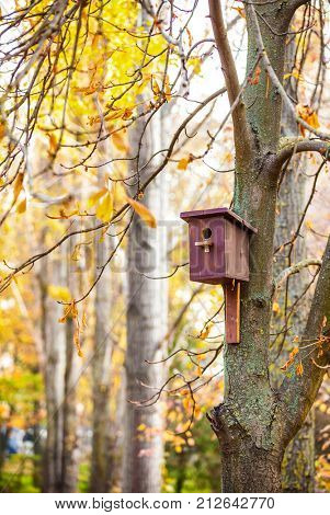 Wooden starling house on the tree