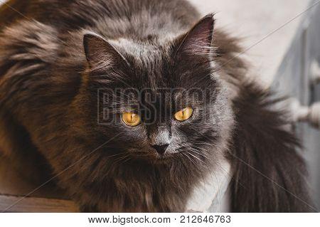Gray cat sitting on the windowsill day