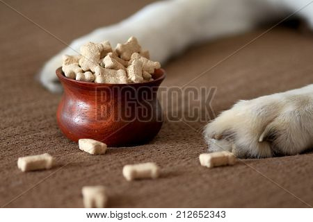 Dog paws beside a bowl of dog biscuits