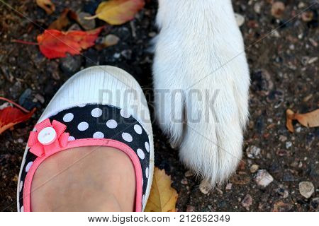 White dogs paw beside a woman's foot, a friendship concept