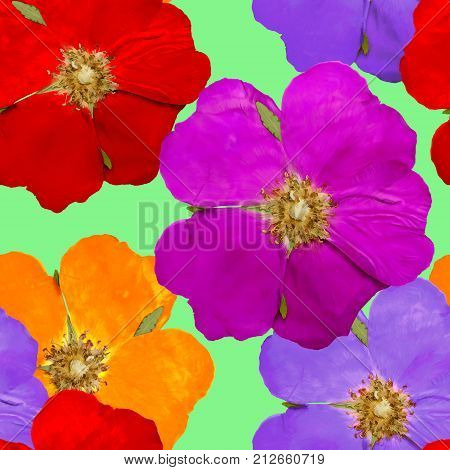 Briar wild rose dog-rose. Texture of flowers. Seamless pattern for continuous replicate. Floral background photo collage for production of textile cotton fabric. For use in wallpaper covers