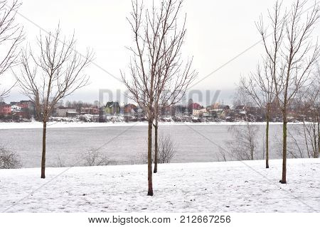 Winter landscape with tree in park Russia.