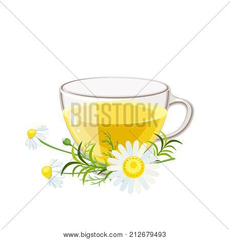 Cup of hot camomile tea and stem with leaves and flowers. Chamomile stem with leaves and flowers. Vector illustration cartoon flat icon isolated on white.