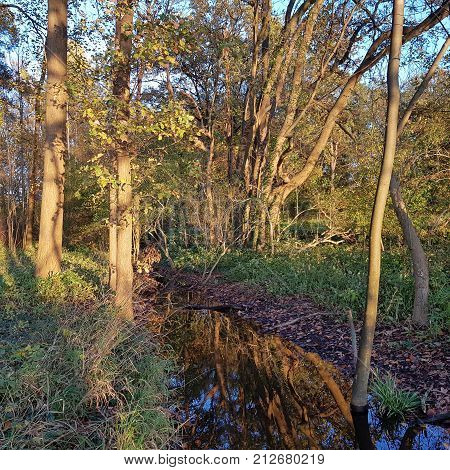 Autumnal riparian forest in the evening light