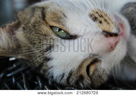 Half sleeping cat, one eye open, one eye closed