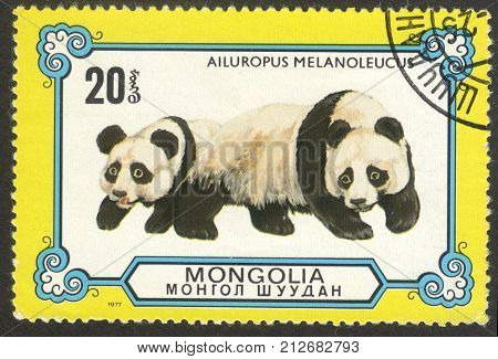 MOSCOW RUSSIA - CIRCA OCTOBER 2017: a post stamp printed in MONGOLIA shows Giant Panda (Ailuropoda melanoleuca) the series