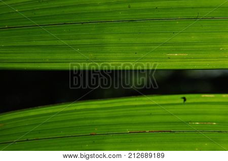 Leaves of tropical plants palms in the sunshine at the bottom of a forest in the jungle.