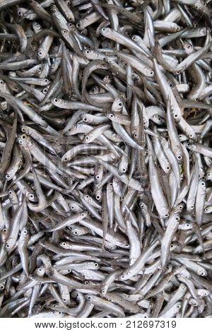 Sea Fish The European Anchovy Placed On A Table On The Market.
