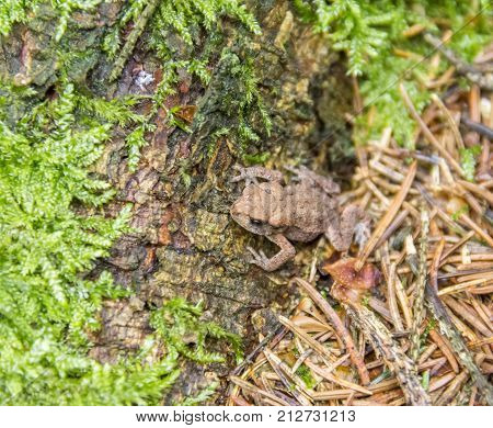 high angle shot of a common toad in forest ambiance