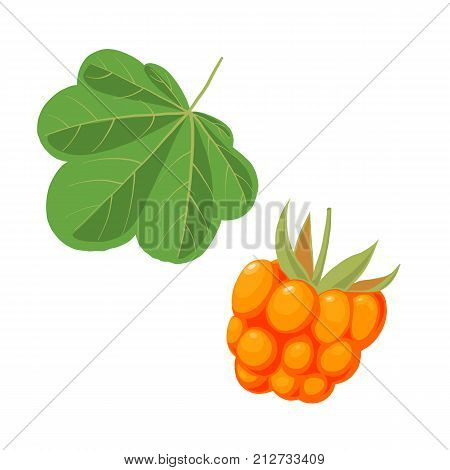 vector cloudberry and leaf isolated at white background
