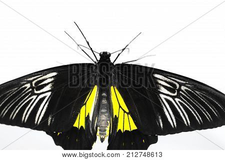 beautiful butterfly on a white background . Photos in the studio