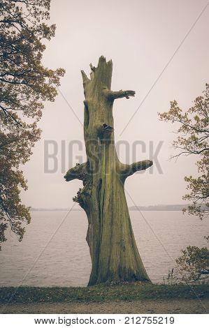 Vintage Photo Of Dead Tree On The Edge Of Lake