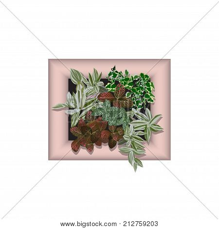Ficus dwarfish (Ficus pumila L.) fittonia silvery (Fittonia argyroneura L.) Vershaffelt's fittonia (Fittonia Verschaffeltii L.) and a tradescantia in a frame for vertical gardening the color vector image