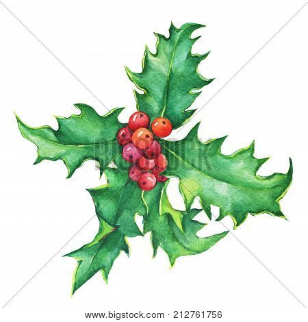 Holly twig (ilex) Holiday, traditional Christmas decoration for greeting card, invitation, wrapping paper. Noel, New Year. Watercolor hand drawn painting illustration isolated on white background.