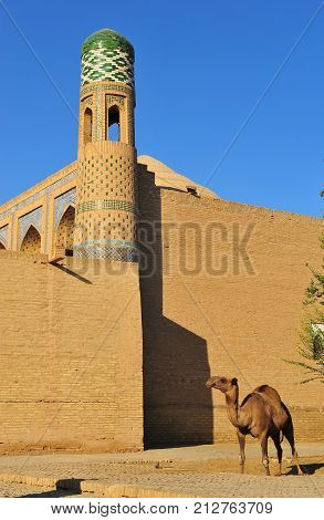Khiva: camel in front of the wall