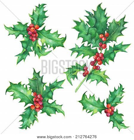 Set Holly twig (Ilex, Christ's thorn) Holiday, traditional Christmas decoration for greeting card, invitation. Noel, New Year. Watercolor hand drawn painting illustration isolated on white background.