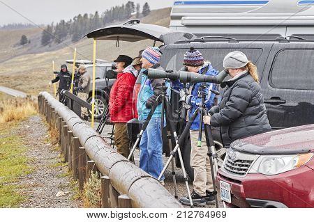 Yellowstone National Park, Wyoming, Usa - October 29, 2016: Wildlife Watchers Observe Wolfs In A Col