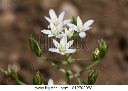 Beautiful snowdrop flowers in nature . In the park in nature