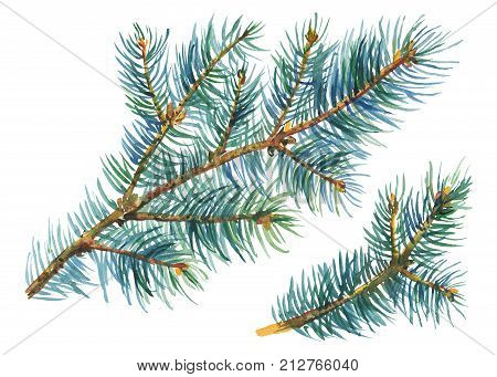 Green spruce branch. Fir, coniferous branches. Christmas tree. Christmas decoration, for greeting cards, invitations, paper. Watercolor hand drawn painting illustration isolated on white background.