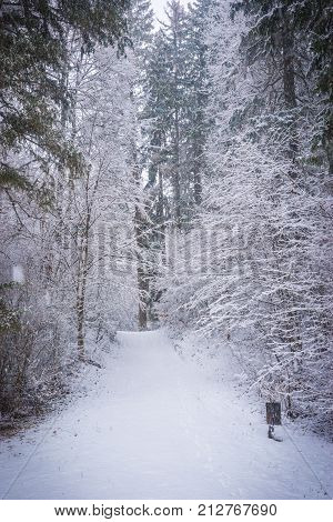 Forest Trees And Bushes Lavishly Covered With Fluffy Snow, Russia