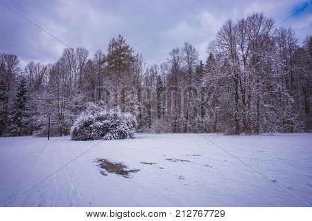 Gorgeous Bush On  Forest Meadow Lavishly Covered With Fluffy Snow
