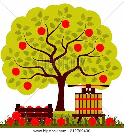 vector apple tree, fruit press and wooden crate of apples isolated on white background