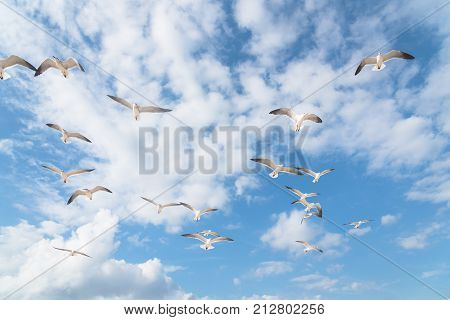 Group Seagulls Are Flying On The Cloud Blue Sky