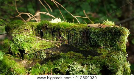 Mystical forest. Log in the woods in the moss. Moss. Boulders in the forest woods, rocks covered by moss and colorful foliage. Autumn season HD