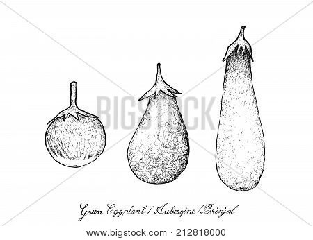 Vegetable and Herb, Illustration of Hand Drawn Sketch Delicious Fresh Green Eggplant, Aubergine and Brinjal Isolated on White Background.