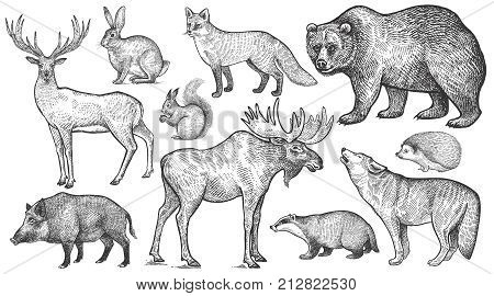 Animals of Europe set. Wolf badger hedgehog fox moose deer bear rabbit squirrel boar isolated. Black and white. Vector art illustration. Wildlife mammals. Nature objects. Vintage engraving.