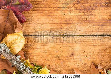 Half Fall Frame On Old Aged Wood