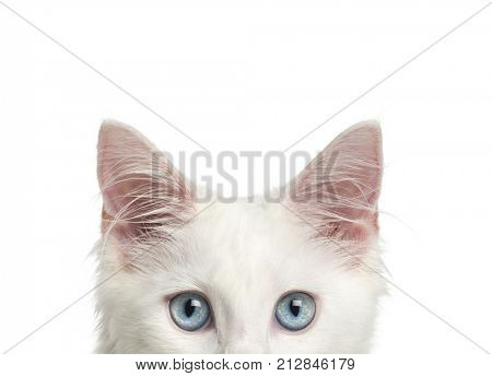 Close-up of a Main-coon kitten's top of head, 4 months, isolated on white