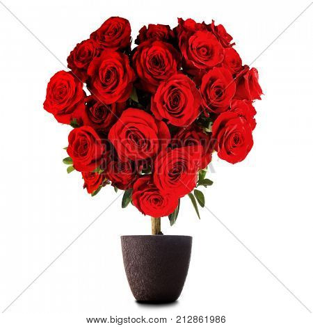 Heart shaped red roses on tree isolated on white background