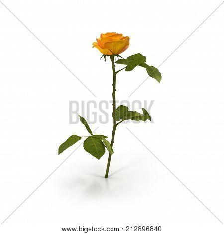 Single beautiful yellow rose isolated on white background. 3D illustration