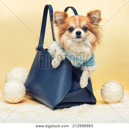 Small dog in the bag on yellow christmas background