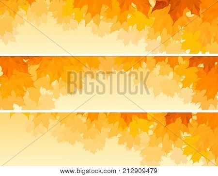 Set of horizontal banners maple tree crown with orange leaves.