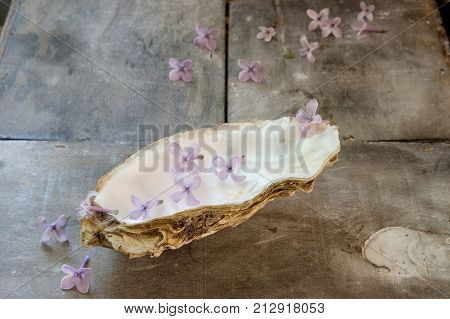 oyster shell and lilac symbol of freshness