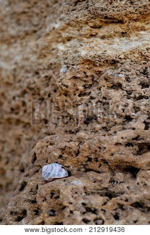 Stones texture and background. Rock texture. snail