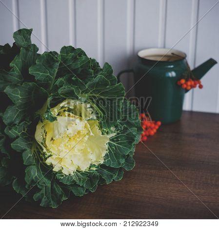 cat and cabbage on a rustic background