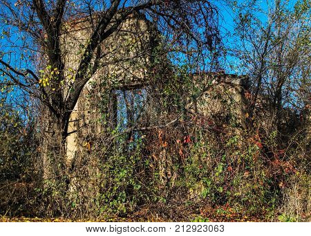 A wall of an old abandoned ruined brick house visible through thickets. The debris of an old house. Ukraine