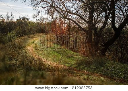 Autumn landscape. Countryside Road through the forest. The path through the thickets