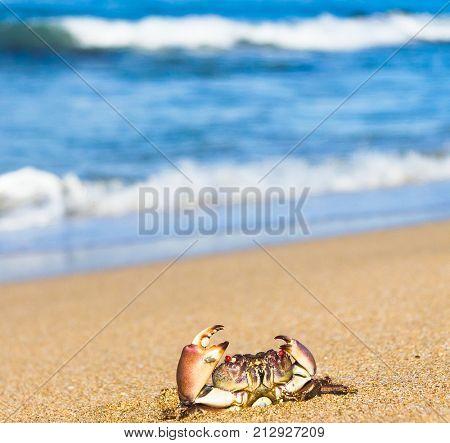 Menacing Eyes On the Shore