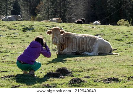 a woman photographing a cow in french Pyrenees