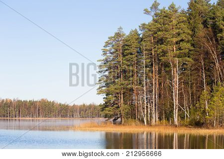 Beautiful autumn landscape with yellow leaves in wetlands. Swamp scenery in fall. Bright sunny landscape in Latvia.