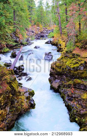 River surrounded by a temperate rain forest taken in Central Oregon
